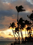 Silhouettes of palm trees on a tropical beach. At sunrise Stock Photo