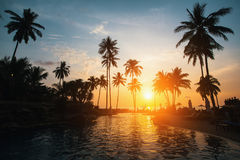 Silhouettes of palm trees on a tropical beach during sunset. Stock Image