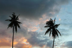 Silhouettes of palm trees on a tropical island, palm trees on a background. Beautiful colorful sunset, palm trees on a background of multi-colored sky, clouds Royalty Free Stock Image