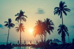 Silhouettes of palm trees on a tropical sea beach Royalty Free Stock Image