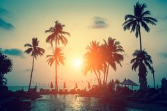 Silhouettes of palm trees on a tropical sea beach. During sunset Stock Photography