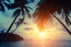 Silhouettes of palm trees on the tropical sea beach. At sunset Royalty Free Stock Photos