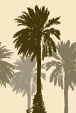 Silhouettes of the palm trees Stock Images