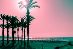 Silhouettes of palms on the beach at sunset. Tropical evening landscape. Fantastic pink turquoise color. Silhouettes of palms on the beach at sunset. Tropical royalty free stock images