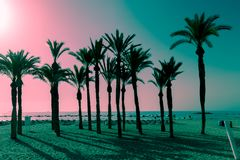 Silhouettes of palms on the beach at sunset. Tropical evening landscape. Fantastic pink turquoise color. Silhouettes of palms on the beach at sunset. Tropical stock image