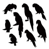 Silhouettes of parrots  on white background. Royalty Free Stock Photos