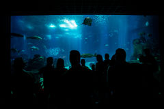 Silhouettes of people against a big aquarium. Royalty Free Stock Photos