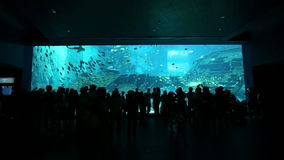 Silhouettes of people against a big aquarium stock video