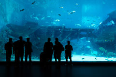 Silhouettes of people against a big aquarium. Tourist looking fi Stock Photography