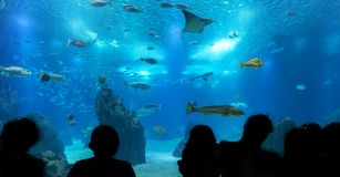 Silhouettes of people against blue aquarium. Stock Photography