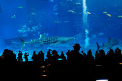 Silhouettes of people in aquarium. In Okinawa stock photos