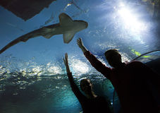 Silhouettes of the people in an aquarium showing on a shark Stock Photo