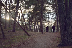 Silhouettes of people in autumn forest, hazy light from setting sun seeping through. Royalty Free Stock Photo