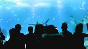 Silhouettes of people who observe tropical sea fish in the Oceanarium.  stock video