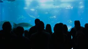 Silhouettes of people who observe tropical sea fish in the Oceanarium.  stock footage