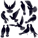 Silhouettes of pigeons that fly and sit Royalty Free Stock Photo