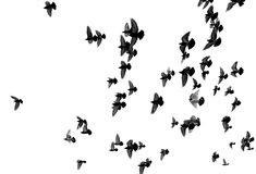 Silhouettes of pigeons Stock Photos