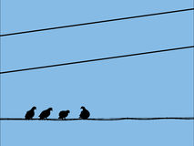 Silhouettes of pigeons sitting on the wires. The silhouettes of pigeons, sitting on the wires Royalty Free Stock Image