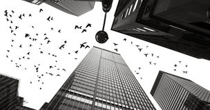 Silhouettes of pigeons between the skyscrapers of Manhattan Royalty Free Stock Image