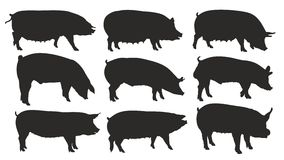 Silhouettes of pigs. Silhouettes of pigs and boars Stock Photos