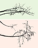 Silhouettes of the pine branches Royalty Free Stock Photos