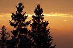 Silhouettes of pine trees Stock Images