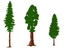 Silhouettes of pine trees Stock Image