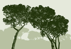 Silhouettes of the pine trees Royalty Free Stock Images