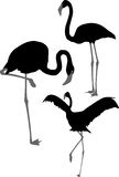 Silhouettes of pink flamingo Stock Photography