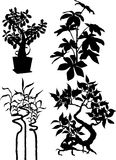 Silhouettes of plants Stock Images