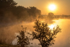 Silhouettes of plants against lake in the morning mist Royalty Free Stock Photos