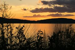 Silhouettes of plants in the foreground, as the sunset adds a beautiful golden glow to the evening sky, Hudson River. Silhouettes of plants in the foreground as royalty free stock photo