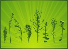 Silhouettes of plants, vector Stock Photography