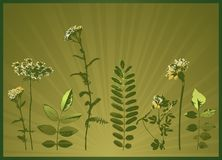 Silhouettes of plants, vector Stock Image