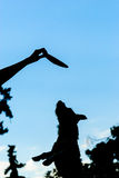 Silhouettes of playing dog and human hand with flying disk. Small dog jumping and catching frisbee Royalty Free Stock Photos