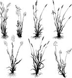silhouettes réglées d'herbe Photos stock