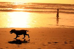 Silhouettes of running dog and a man on the beach. During sunset Stock Photo