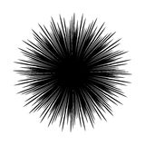 Silhouettes of sea urchin  black and white  Stock Image
