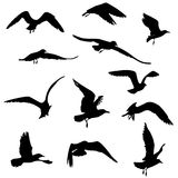 Silhouettes of seagulls flying. 11 black silhouettes of seagulls flying illustration royalty free illustration