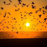 Silhouettes seagulls over the Ocean during sunset. Nature. Stock Photography