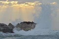Silhouettes of seals ion the big rock island under big wave Royalty Free Stock Image