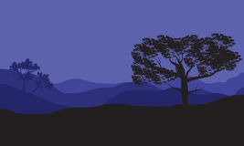Silhouettes of shade tree at the night. Silhouettes of one shade tree at the nigt Royalty Free Stock Image