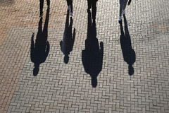 Silhouettes and shadows Royalty Free Stock Photo