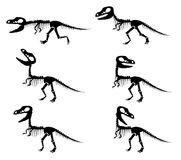 Silhouettes of the skeleton of a Tyrannosaurus rex Royalty Free Stock Image