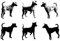 Silhouettes and sketch illustration of mini pincher dog Stock Photos
