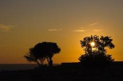 silhouettes solnedgångtrees Arkivfoto