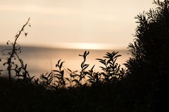 Silhouettes of some plants in the dune at sunset. Ocean in the background Royalty Free Stock Photos