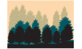 Silhouettes of spruce. On the hills Royalty Free Stock Photo