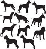 Silhouettes of standing working dogs Stock Photo