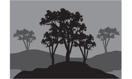 Silhouettes of three trees Royalty Free Stock Image